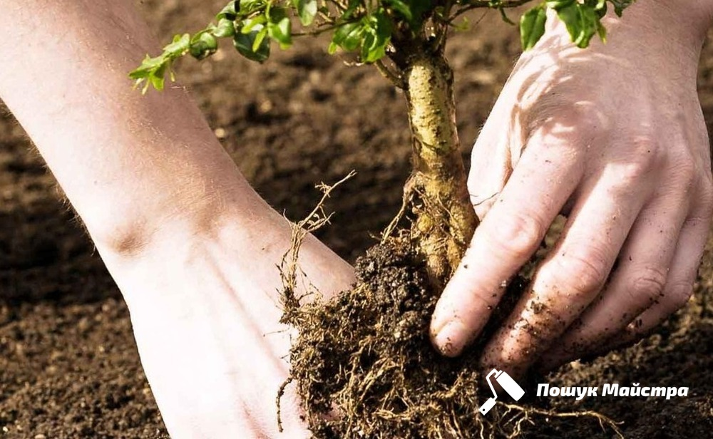 Посадка дерев Львів